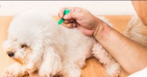Top 3 Pet Drugs for Flea and Ticks