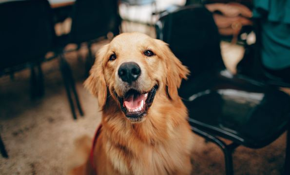 How CBD Oil for Dogs Might Be The Best Alternative Method of Treatment
