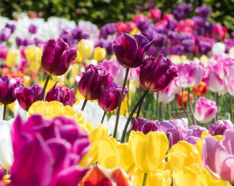 Top 11 Flowers That Attract The Beneficial Insects