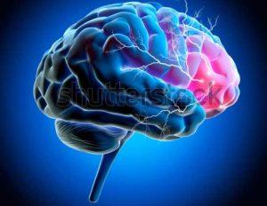 CBD Affects Your Brain