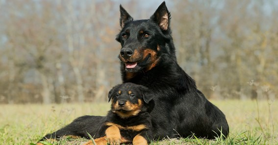 The Healthy Breed Of Dogs Which You Need To Bring Home