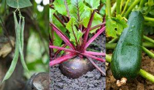 The Best Way To Grow Vegetable Seeds In Your Home Garden